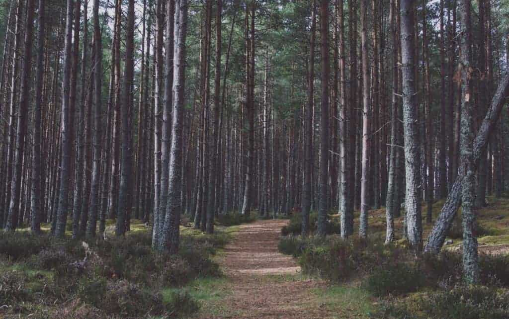 Forest Noises